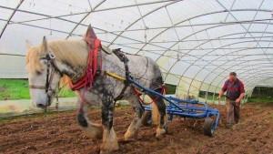 un-porte-outils-tire-par-un-cheval-au-jardin-des-puys0